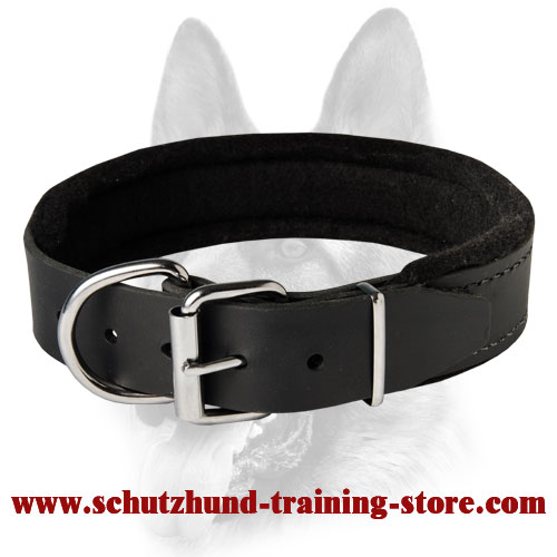 Schutzhund Padded Leather Dog Collar with Thick Felt for All Dog Breeds