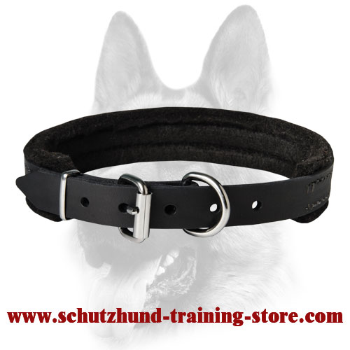 Padded Leather Collar for All Dog Breeds 1 inch (2.5 cm) width