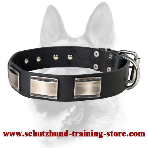 Extremely Fashionable Training Leather Dog Collar for Your Schutzhund Breed