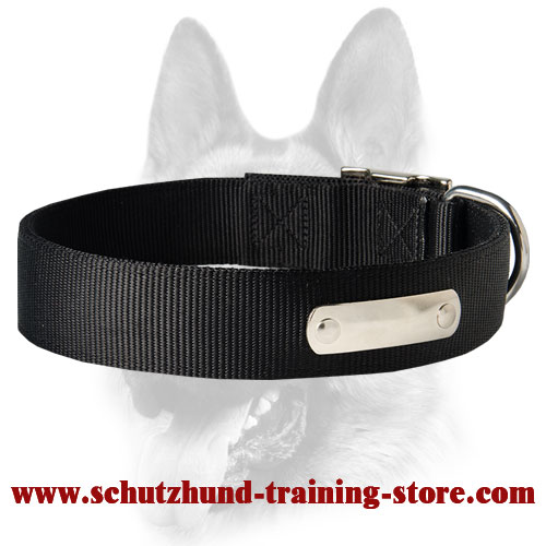 Have 2 Ply Nylon Dog Collar w/h name tag/Metal Buckle