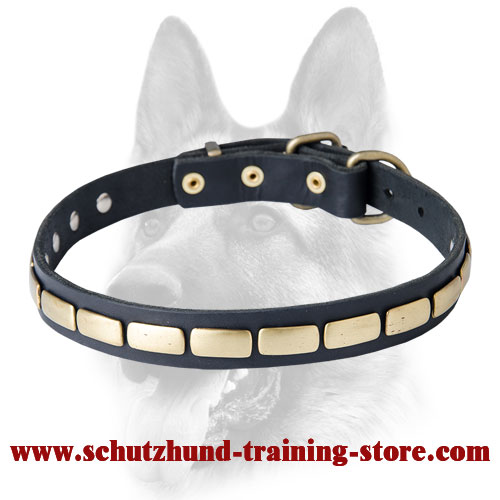 Special Leather Dog Collar with Plates for Schutzhund