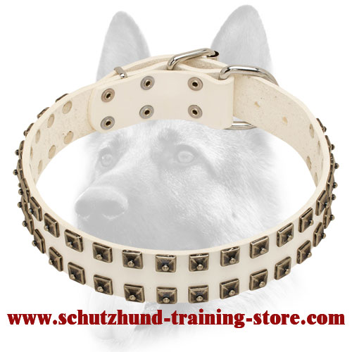 White Leather Dog Collar with Dotted Nickel Covered Studs