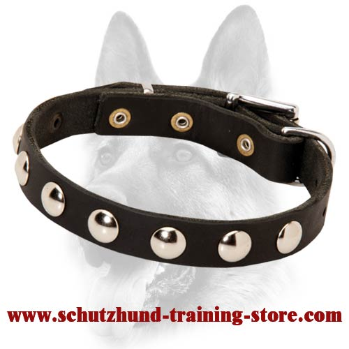 Smart Leather Dog Collar with Round Studs for Schutzhund Training