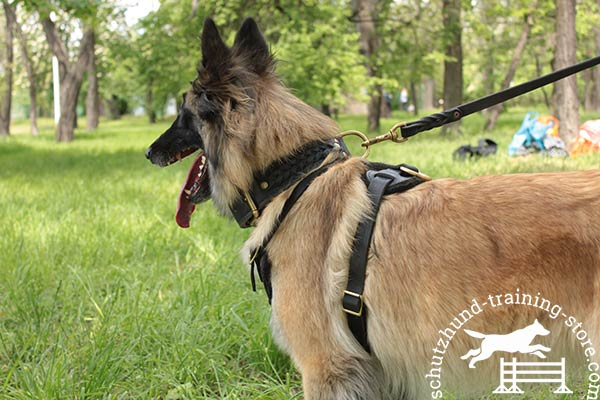 Tervuren leather leash with rust-proof hardware for any activity