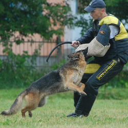 Schutzhund Dog Equipment