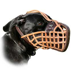 Muzzle that will suit your dog