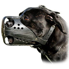 Fit this Leather Muzzle by means of adjustable straps
