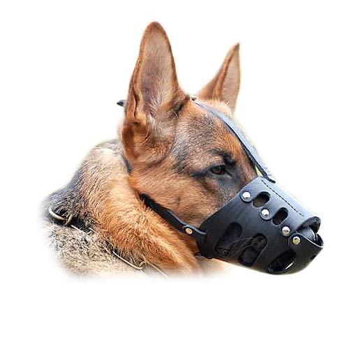 Best Dogs For Schutzhund