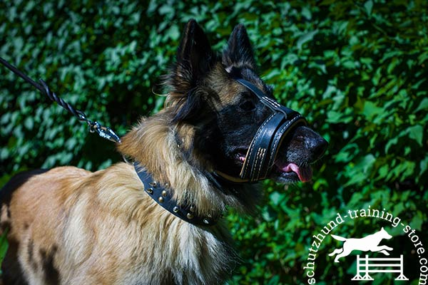 Lightweight natural leather Tervuren muzzle