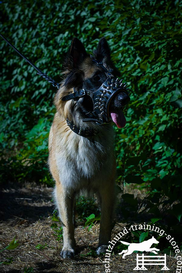 Leather Tervuren muzzle for long walking
