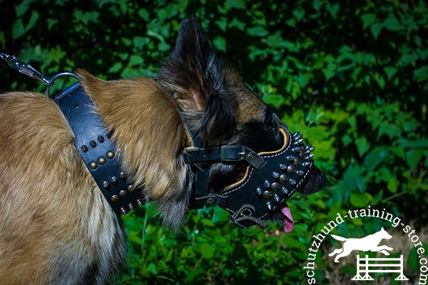 Padded leather Tervuren muzzle