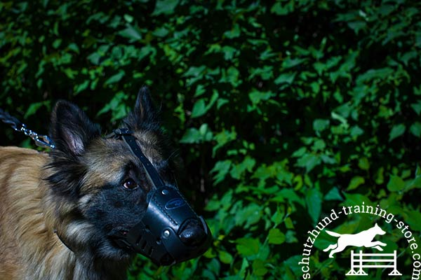 Riveted genuine leather Tervuren muzzle