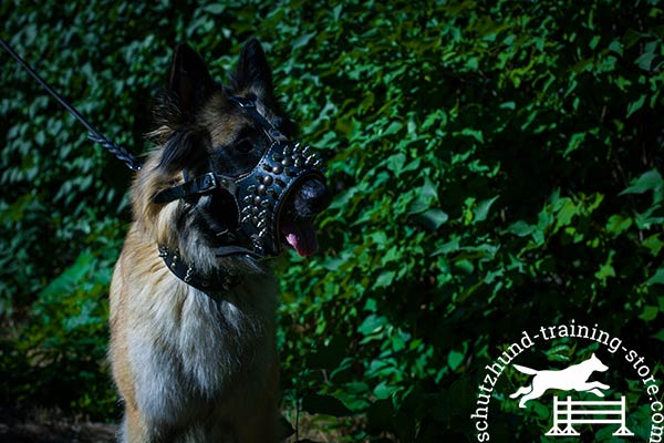 Leather Tervuren muzzle adorned with studs and spikes