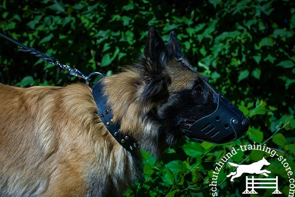 Tervuren leather muzzle of genuine materials with traditional buckle for improved control