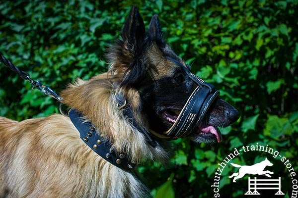 Tervuren leather muzzle with corrosion resistant fittings for walking