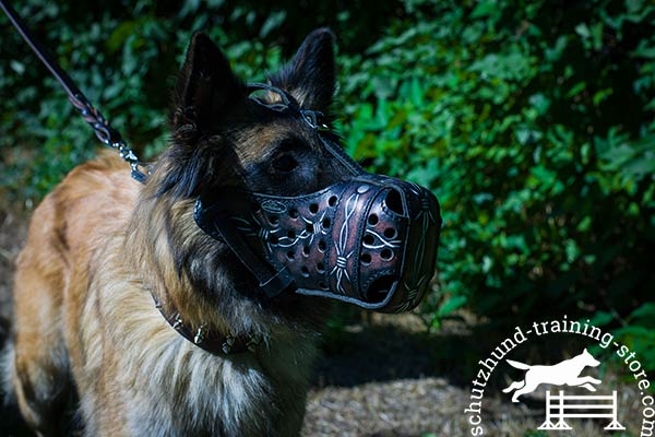 Tervuren leather muzzle with durable nickel plated hardware for perfect control