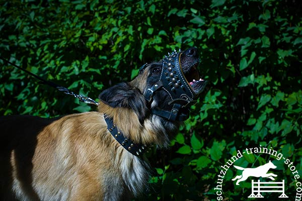 Tervuren leather muzzle with reliable nickel plated hardware for any activity