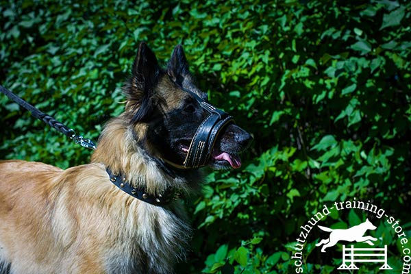 Tervuren leather muzzle with rust-resistant hardware for walking