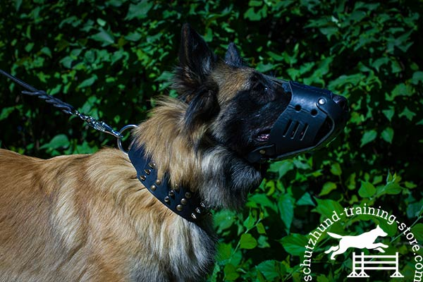 Tervuren leather muzzle with rust-proof fittings for improved control