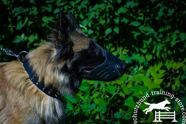 Tervuren leather muzzle with rust-free fittings for any activity