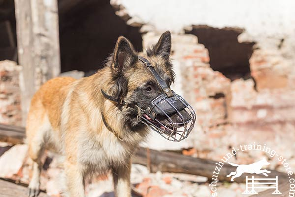 Tervuren wire basket muzzle with rust-proof hardware for quality control