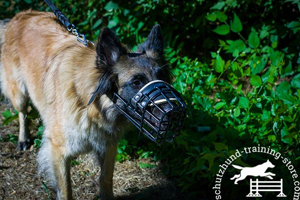 Tervuren wire basket muzzle with rustless hardware for basic training