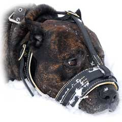 Leather dog muzzle with additional between ears strap  for best fixing