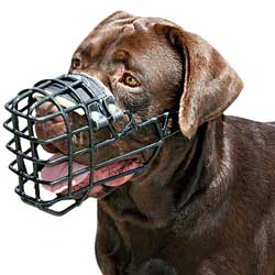 Bitter cold wire basket dog muzzle
