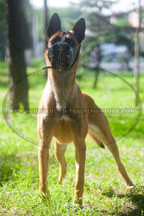 Ventilated Comfortable Dog Muzzle Leather for Belgian Malinois