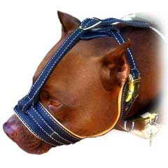 Comfortable everyday leather dog muzzle
