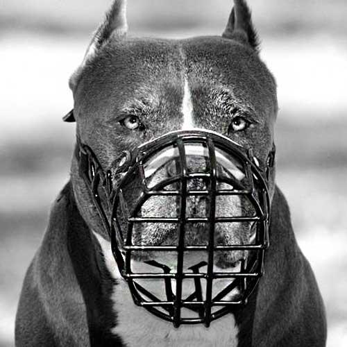 Schutzhund Wire Rubber Covered Basket Dog Muzzle for Winter [M10 ...