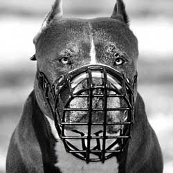Multipurpose wire cage dog muzzle