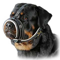 Superb high quality leathern dog muzzle