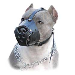 Everyday Schutzhund leather muzzle