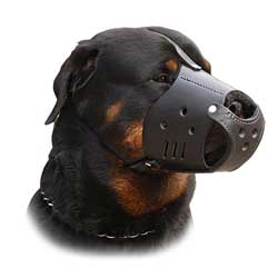 Comfortable leather everyday dog muzzle