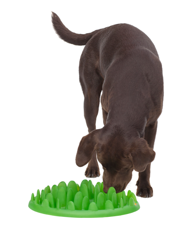 Dependable Dog Feeder Green Safe for Health
