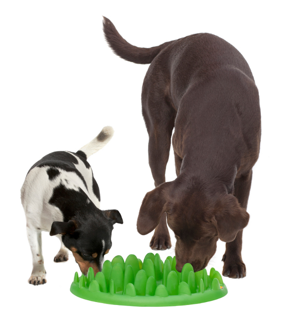Grass Like Pet Feeder Ideal for 2 Dogs Mealing
