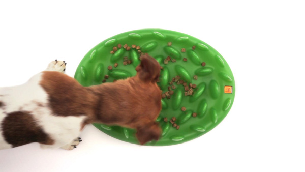 Dog Feeder with Dry Food Distributed Throughout It